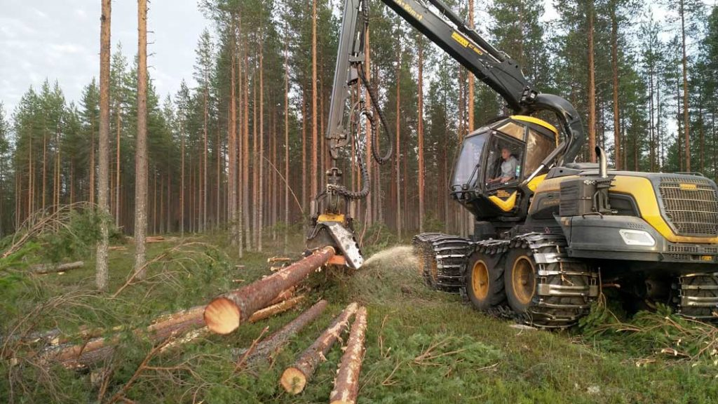 Hakkuukone katkoo puita.